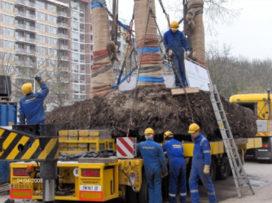 Dertig meter hoge metasequoia's verplaatst
